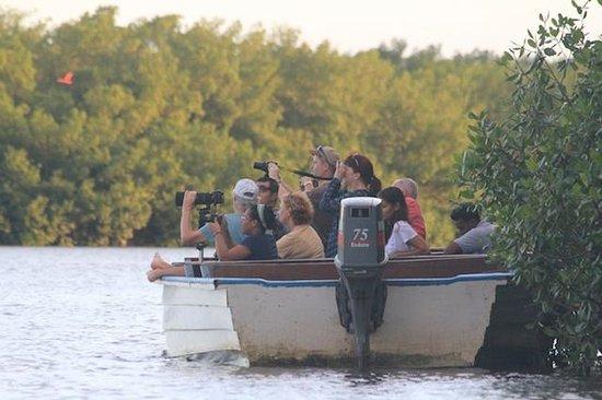 Caroni Lagoon National Park: Tour boats