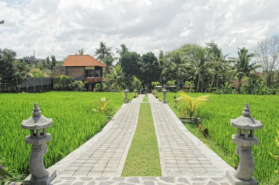 Kama Bisma Cottage : Rice Fields