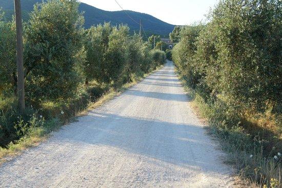 Agriturismo Serignano alle Rocchette : The road to Serignano :)