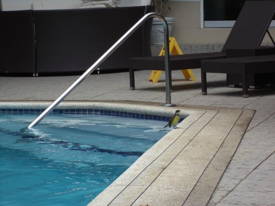 Trade Winds Hotel : little birdy poolside