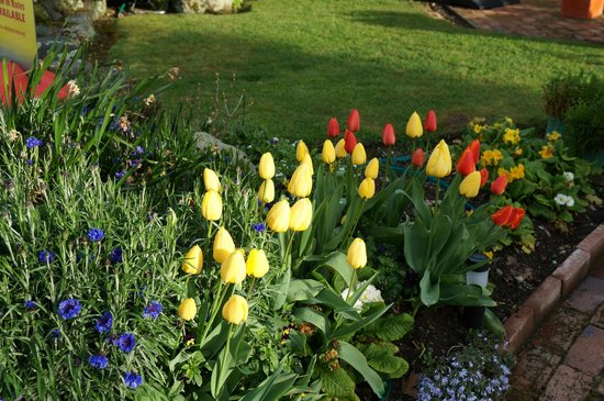Lakefront Lodge: nice tulip gardem