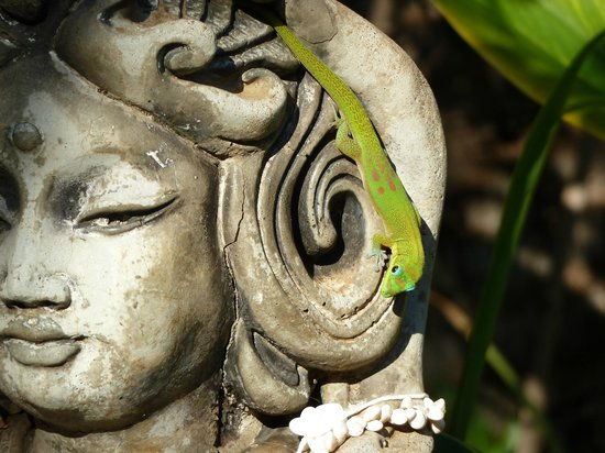 Ocean Breeze Hideaway: A gecko in the garden