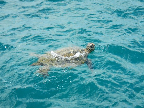 Four Winds II Snorkel at Molokini: Turtle sighting!
