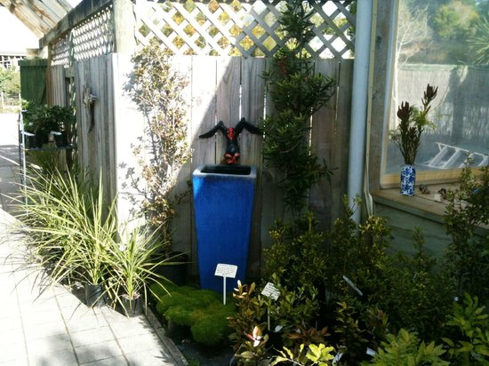 Native Tree Cafe : Our pukeko