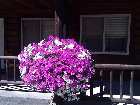 Bonners Ferry Log Inn: Gorgeous Flowers