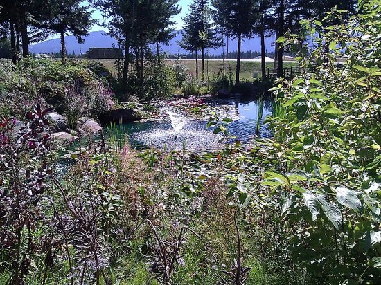 Bonners Ferry Log Inn: Lovely Pond