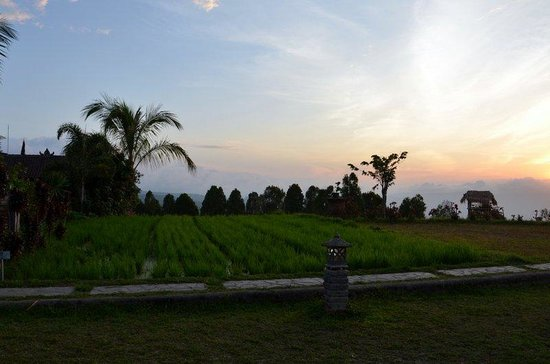 Puri Lumbung Cottages: Rice-field
