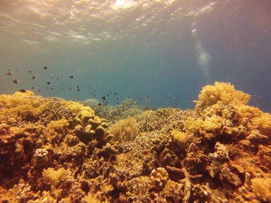 Bunaken Island Resort: underwater