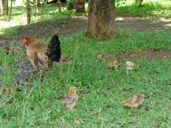 Bunaken Island Resort: garden