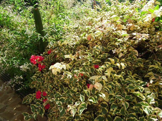 B&B Villa San Marco: plants