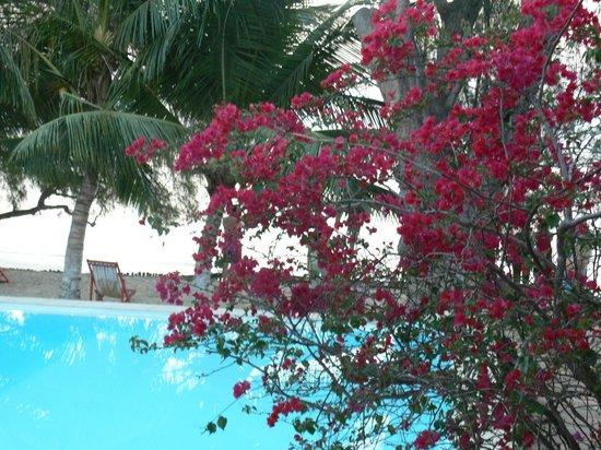 Hotel Bamboo Club: pool