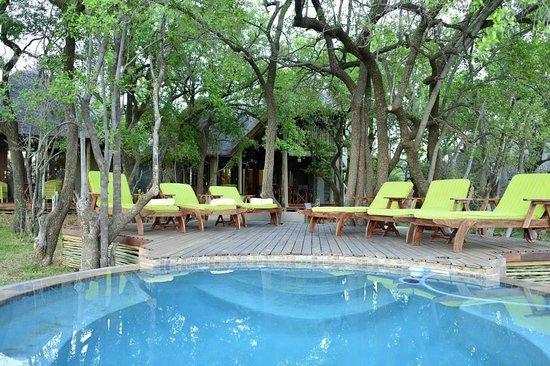 Tambuti Lodge: Pool