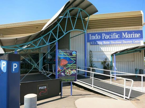 Indo Pacific marine