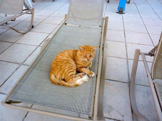 Queen's Bay Hotel: The hotel cat