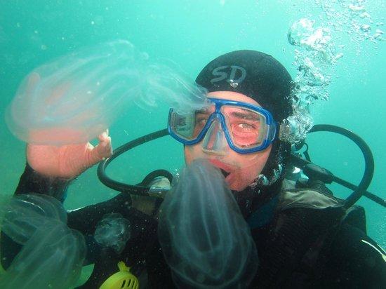 Popular Scuba Diving Books