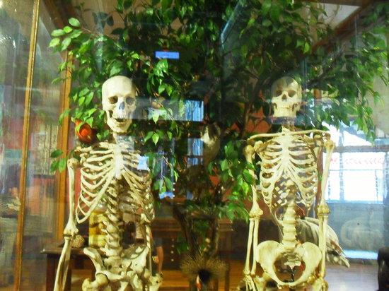 Museo Nacional de Ciencias Naturales (Museum of Natural Sciences): Adan y Eva