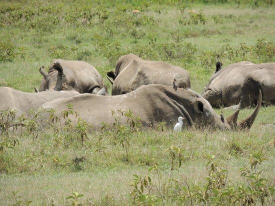 Loldia House: Rhinos at Lake Nakuru