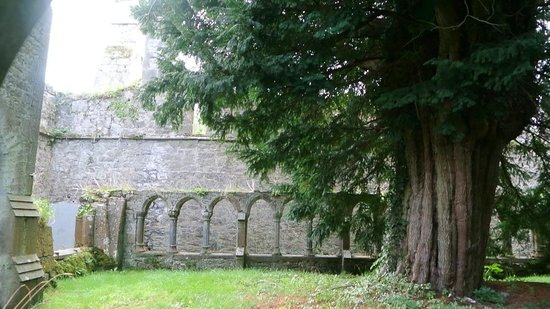 Old Franciscan Friary: the Courtyard and tree