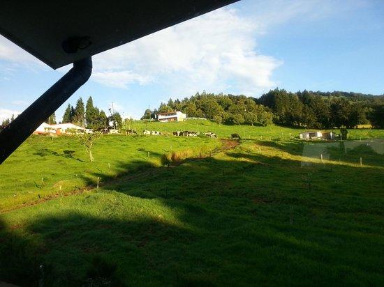 Altura Hotel : Heavenly green