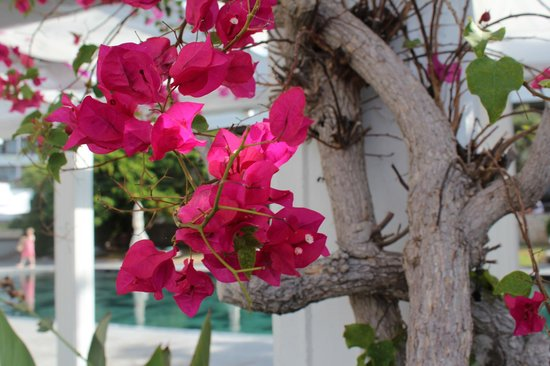 Almyra Hotel: Flowers at the family pool area