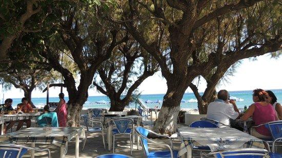 Monaxia : hygge under træerne.
