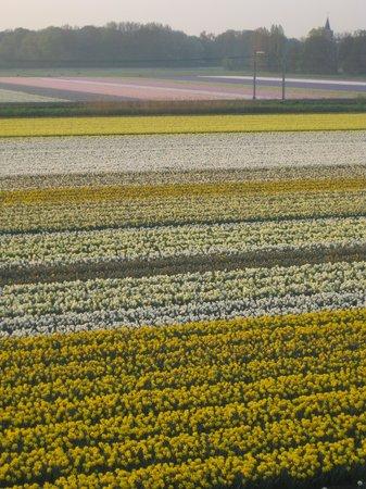 Van der Valk Hotel Sassenheim-Leiden : April flowers within walking distance
