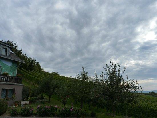 Kühns Mühle: Отель и виноградники
