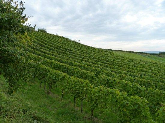 Kühns Mühle: Виноградники вокруг отеля