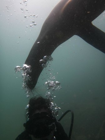 Galapagos Underwater: They love the bubbles