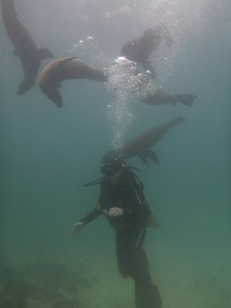Galapagos Underwater: The playful sea lions