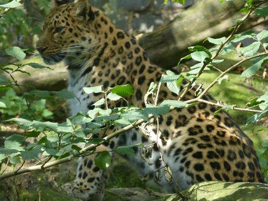 Kulu Safaris Sri Lanka: Leopard