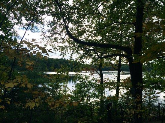 Walden Pond State Reservation: view