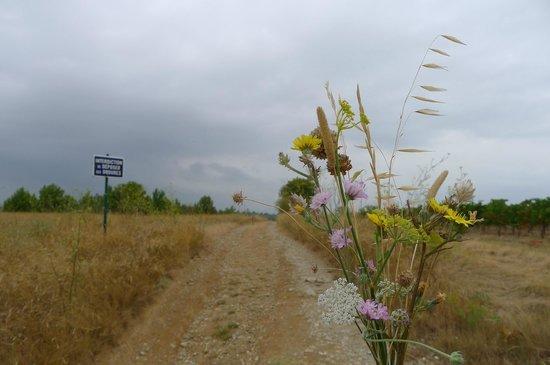 O'Vineyards: close to vineyard