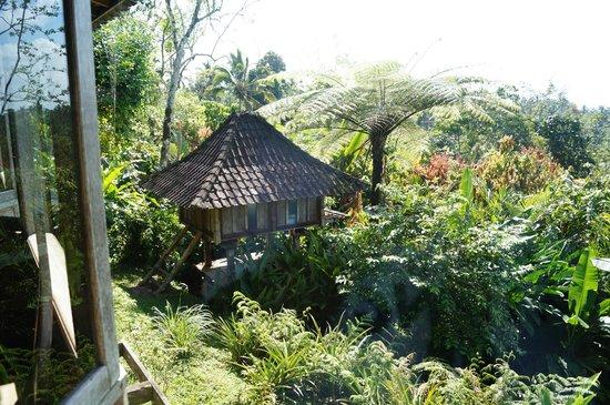 Bali Mountain Retreat: view from restaura