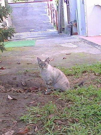 Hotel Alexander: Ännu en av familjens finna katter.