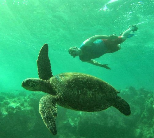 Hawaiian Paddle Sports: Snorkeling off Makena State Beach Park