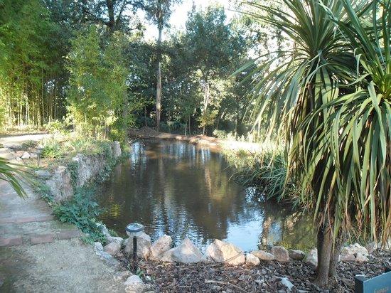 Casa9 Hotel : Le ruisseau traverse un petite pièce d'eau