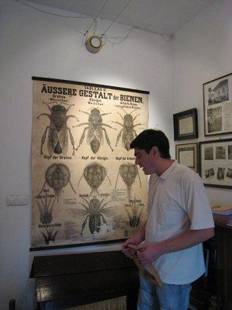Sremski Karlovci: bee/wine museum