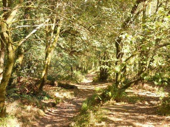 Hillside House: Tarr steps walk