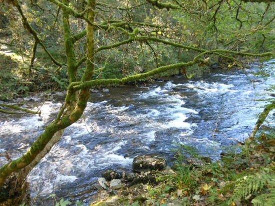 Hillside House: River at Tarr steps