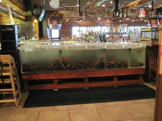 Newick's Seafood Restaurant: Just a few lobsters?