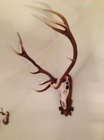 Hotel Post: Hunting trofee