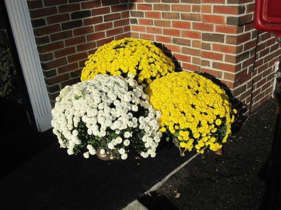 Best Western Adams Inn Quincy-Boston: Happy Mums Everywhere.