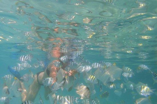 Glacis, Seychellerne: sous l'eau, à quelques metres du bord...