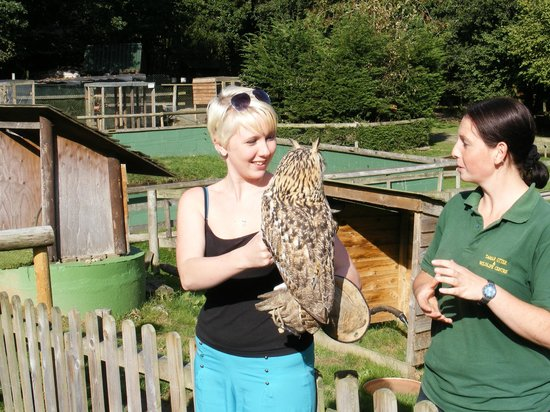 Tamar Otter and Wildlife Centre: The Eagle Owl