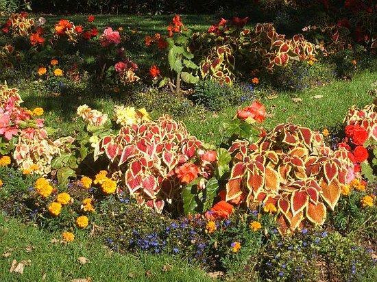 Annapolis Royal Historic Gardens: Begonias and coleus