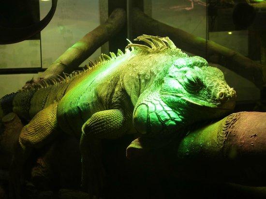 Vivarium Lausanne: Reptile
