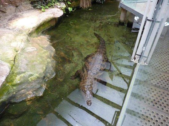 Vivarium Lausanne: Crocodile