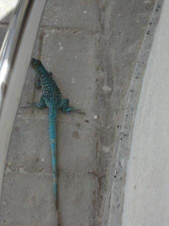 colorful lizard at the beach bar