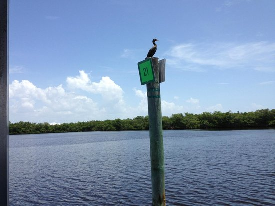 Tarpon Bay Explorers : The guides knew all the birds by name
